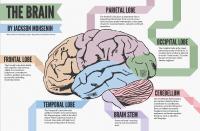 The Human Brain (full documentary) HD