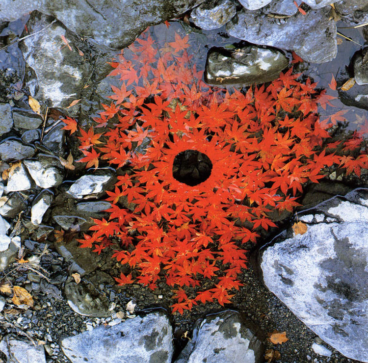 Rivers and Tides-andy-goldsworthy-4